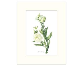 Lisianthus Botanical Print by Heather Raeburn