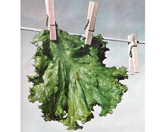 Lettuce Hanging Out to Dry, Vintage Photograph, Digital Download, Circa 1975, Clothes Line Lettuce Greens