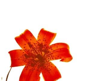 Pinwheel Flower Photo Mounted on Bamboo