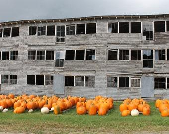 Travel photography - landscape - nature - pumpkins - autumn - New England
