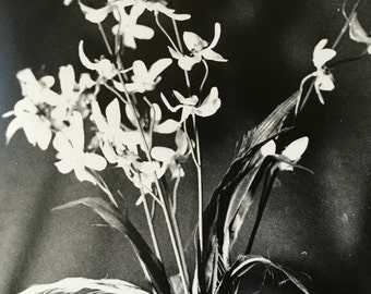 Vase Stilllife: Film Photograph
