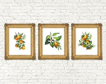 Instant Download Watercolor Mandarin Orange Printable Set of 3  | Kitchen Decor Botanical Prints | Botanical Watercolor | 8x10