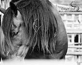 "Horse ""Rusty"" Fine Art Print, Wild Horse Art, Rodeo Fine Art, Western Fine Art, Cowboy, Cowgirl Fine Art, Canvas, Home Decor, Wall Art"