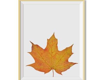 Maple Leaf Print, Maple Leaf Photo, Maple Leaf Wall Art, Instant Download, Maple Leaf Printable Art, Maple Wall Art, Leaf Art, Maple Leaf