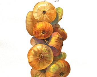 Onion, watercolor, Onion painting, Vegetable watercolor, Kitchen art, Botanical, Kitchen Decor, Rural, Original artwork