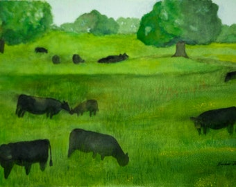 Black Angus Grazing in a Pasture
