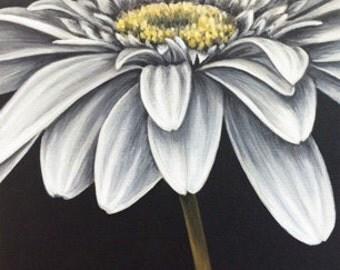 Gerber Daisy #3