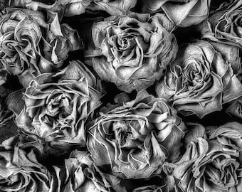 Dried Roses No 1, Fine Art Print from an original photography by Jean-Yves Bruel