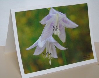 Hosta Lilies Blank Note Cards 2016-00482