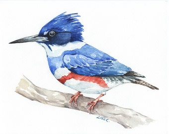 "Watercolor Print  ""Belted Kingfisher"" Bird Art, Bird Print, Wall Decor, Bird Nursery print"
