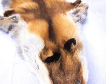 Red Fox skin / fur / Fox fur