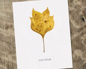 "Autumn Tulip Poplar Leaf Watercolor Print - 8x10"" - FREE SHIPPING"