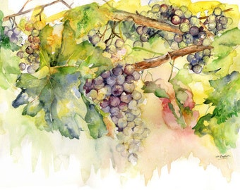 Watercolor Summer Grapes Original Painting, Grape Art, Wine Grapes, Free Shipping