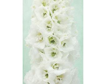 Flower Art Print, Flower Photography, Wedding Decor, White Mint Wall Art, White Delphinium , Bedroom Art