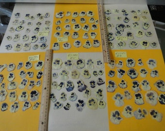 SALE Pansies Grown in Alaska over 150 Real Pressed Flowers Preserved and Dried 427 FL