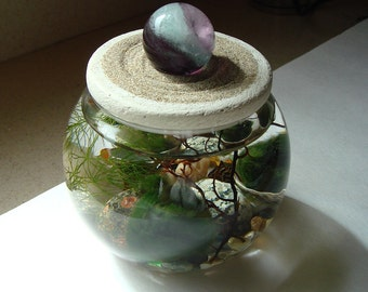 Stone Top. Zen Garden. Marimo Ball. Unique. Terrarium with Fluorite Gemstone Sphere