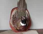 Vintage wall hanging taxidermy pheasant full head large on shield shaped wood