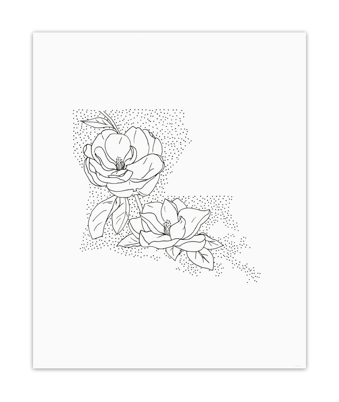 Louisiana Magnolia State Flower Drawing Giclee