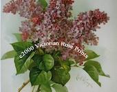 French Lilacs Bouquet, Art Print, Paul de Longpre, Lilac, Flower, Floral, Shabby Chic Decor
