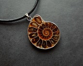 Pendant - Ammonite (n4), fossil, modern, contemporary - by Schneider Gallery