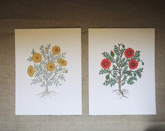 Poppy marigold original floral gardening art modern print digital reproduction botanical colorful summer home decor