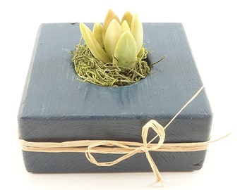 Rustic Blue Wood Gift, Guest Favors - Succulent, Cactus, Haworthia, Air Plant, Mix - Wedding, Bridal, Baby Shower, Event