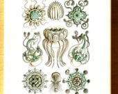 Turquoise Jellyfish Illustrations- Glass Fusing Decal, Ceramic Decal, Enamel Decal