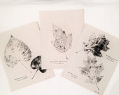Botanical Leaf Rubbings 1927 -  Set 3 - Red Oak - Nine Bark - Carolina Poplar - Wall Art - Vintage