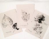 Botanical Leaf Rubbings 1927 -  Set 3 - Red Oak - Nine Bark - Carolina Poplar - Wall Art - Vintage