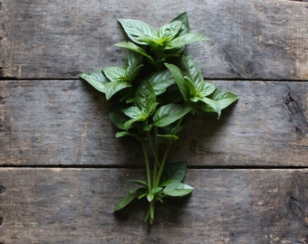 Sweet Basil, heirloom herb seeds, organic seeds from our farm, eco friendly gardening, herb garden, organic gardening, gardener