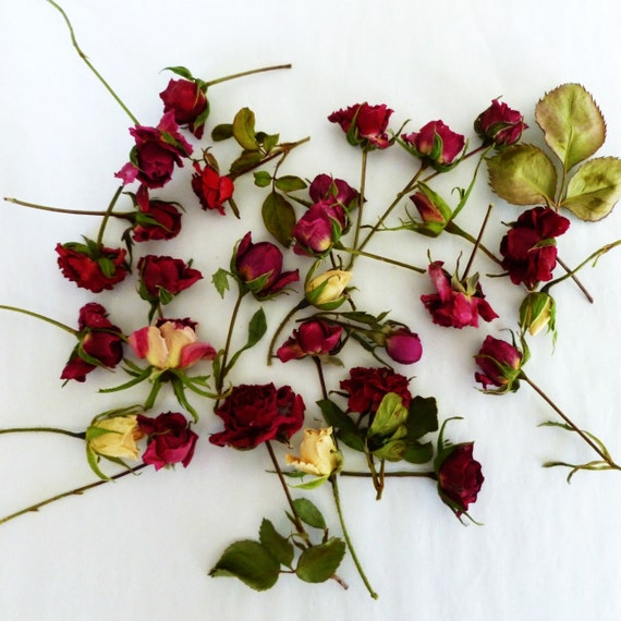 Rosebuds,  Dry Flower, Wedding Decoration, Red, Ivory, Rose, Craft Supply, Centerpiece, Red,  Miniature, Confetti, Dried Rosebuds, 100 Roses