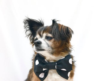Pet Dog Bowtie Black and White Polka Dot