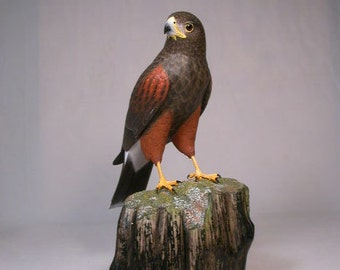 """10 1/2"""" Harris's Hawk Hand Carved Wooden Bird carving"""