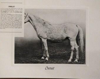 Vintage Crabbet Arabian Horse Art Print - Onrust