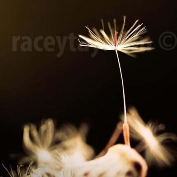 Dandelion Print, Black, Gold, Flower Photography, Bedroom Wall Art, Minimalist, Black Wall Art, Dandelion Seed