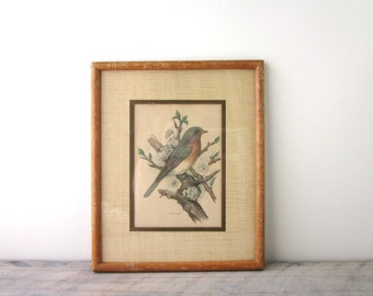 Vintage Bird Print in Wood Bamboo Frame with Glass Insert Signed Print Robin