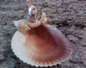Sea Shell Jewelry Dish //Ring Holder //f524