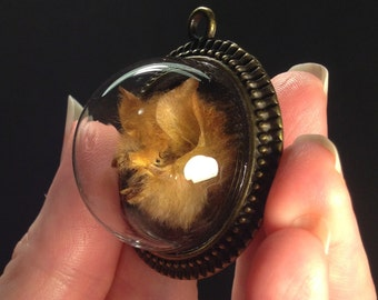 PREORDER - The Red Sabbath: Real Preserved Bat Head Under Glass Dome Pendant Necklace