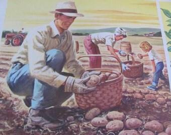 """Original Vintage School Classroom Poster Print - Circa 1965 - Harvesting Potatos - 9"""" x 12"""""""