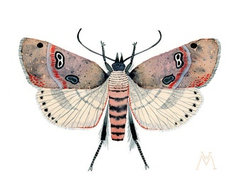 ORIGINAL Moth water-colour painting insect