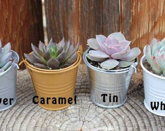 """15 DIY Lovely Wedding Collection  Succulents in 2"""" containers with 15 Adorable Pail-Your Choice of Color- Party FAVOR Kit succulent gifts*"""