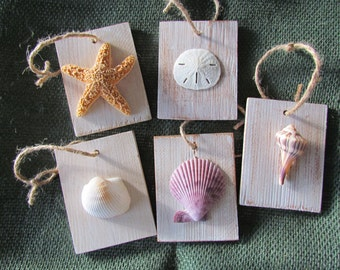 Seashells on Wood, Set of Five