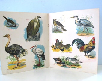Vintage Bird Picture Book Early Reference Book Beautiful Illustrations