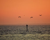 Ocean Sunset Photography Print 11x14 Fine Art Florida Punta Gorda Gulf Coast Birds Beach Landscape Photography Print.