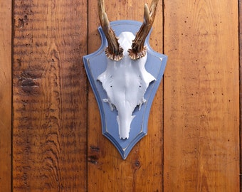 "Stylish wall sculpture, deer antler with scull, deer scull, deer mount, wall decoration, antler hook, antlers, ""Alfons"""