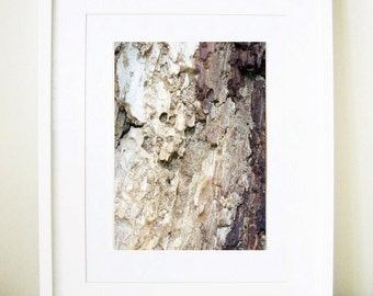 Contemporary Nature Photography - Brighton Bark - fine art print, wood, tree, texture, patterns, close up, industrial home, 8x10