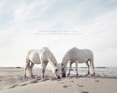 Horse Photography, White Horse, White Wall Art, Equestrian Print, Gift for Lovers, Gift for Him, Gift for Her, Horse Art, Horses Prints