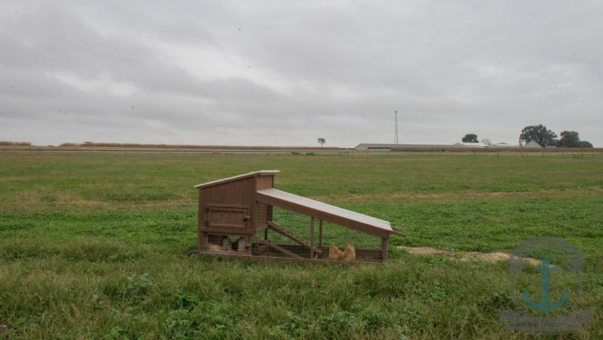 chicken tractor on pasture