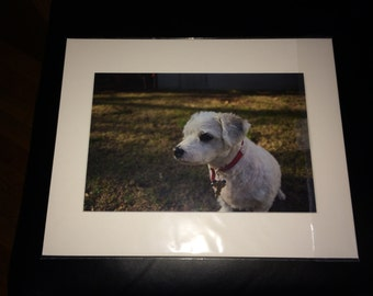 dog looking at me outside photo print photography 11x14