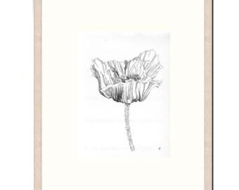 "ORIGINAL - HAND DRAWN - Botanical Ink Drawing, Flower Art, ""Poppy Study 30"". Poppy Pods, Black and White Drawing, Botanical Art"